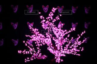 花のイルミネーション後ろに狐お面の写真・画像素材[1222804]