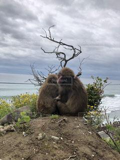 猿の親子の写真・画像素材[2242202]