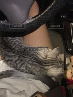 運転中の膝の上でお昼寝の写真・画像素材[1381015]