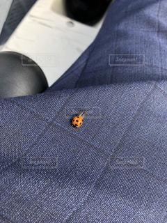 飛んでスーツに付くてんとう虫の写真・画像素材[1236036]