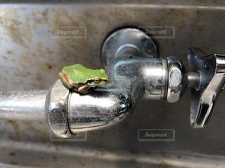 蛇口とカエルの写真・画像素材[1351816]
