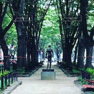 仙台 定禅寺通りの写真・画像素材[1309171]