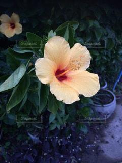 植物の花の花瓶の写真・画像素材[1223255]