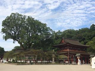 とある神社の大木の写真・画像素材[1226963]