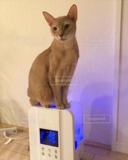 加湿器に乗る猫の写真・画像素材[2767413]