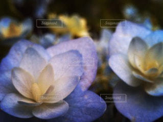 自然の写真・画像素材[108222]