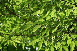 近くの木のアップの写真・画像素材[1223773]