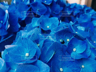 青の写真・画像素材[1229691]