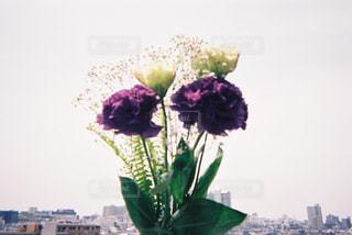 花束をきみにの写真・画像素材[1229696]