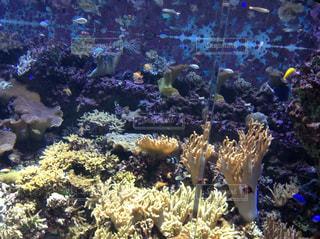 サンゴの水中ビューの写真・画像素材[1224249]