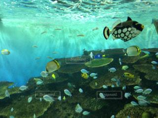 水槽の中に泳ぐ魚たちの写真・画像素材[1224339]