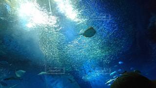 水槽のなかの魚たちの写真・画像素材[1225356]