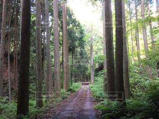 雑木林の木の写真・画像素材[1224396]