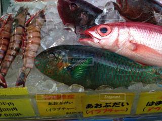 近くに魚のアップの写真・画像素材[1225923]