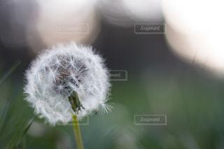 近くの植物のアップの写真・画像素材[1224657]