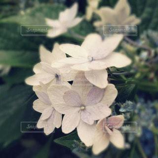 花の写真・画像素材[39753]