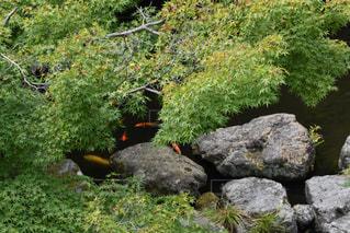 印象派風の池の風景の写真・画像素材[1374985]