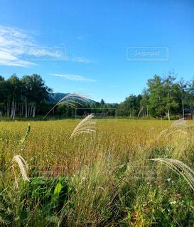 蕎麦畑00001の写真・画像素材[1225297]