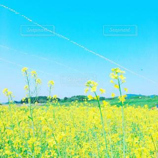 フィールド内の黄色の花 - No.1224857
