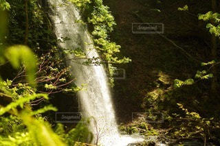自然の写真・画像素材[49671]
