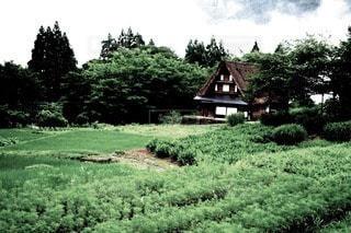 自然の写真・画像素材[50085]