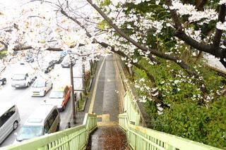 桜の写真・画像素材[429976]