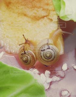 食事中のカタツムリの写真・画像素材[1224948]