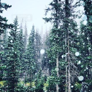 雪と木の写真・画像素材[1224976]