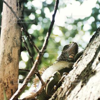 木登りの写真・画像素材[1224978]