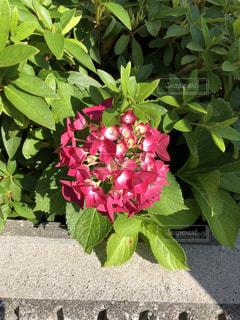 近くの花のアップの写真・画像素材[1233135]
