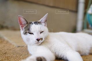 猫の写真・画像素材[1225416]