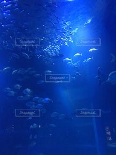 海の中の神秘の写真・画像素材[1226344]