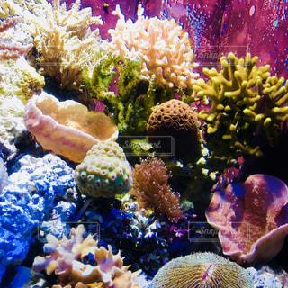 美ら海水族館の写真・画像素材[1226239]