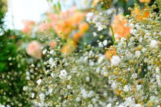 近くの花のアップの写真・画像素材[1227233]