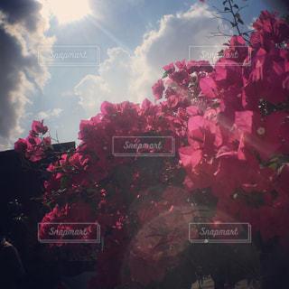 花の写真・画像素材[1226375]
