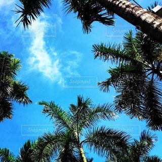 ツリーの横にあるヤシの木のグループの写真・画像素材[1227142]