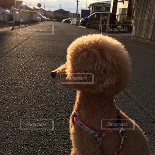 犬の写真・画像素材[1229351]