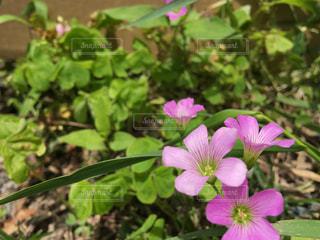 お花の写真・画像素材[1234255]