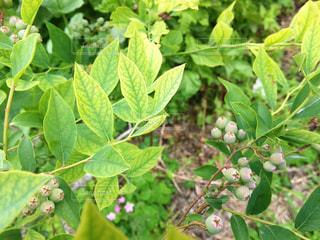 緑の葉の木の写真・画像素材[1236117]