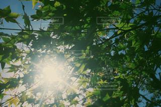 木漏れ日の写真・画像素材[1228524]