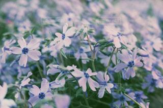 花の写真・画像素材[1228539]