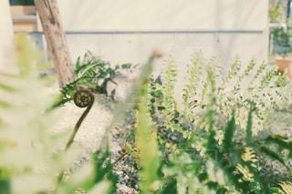 なんて植物?の写真・画像素材[1228547]