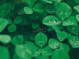 水玉。の写真・画像素材[1725552]