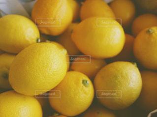 レモンたち。の写真・画像素材[1745068]