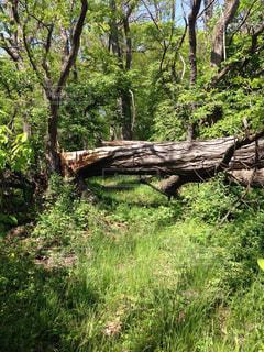 緑豊かな緑の森 迫力ある倒木の写真・画像素材[1232406]