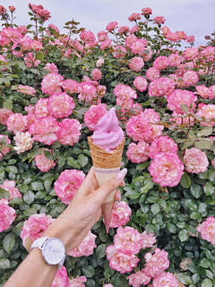 バラアイスクリームとピンクのバラの写真・画像素材[1228044]