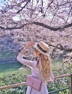 桜と川を眺める女性の写真・画像素材[1228324]