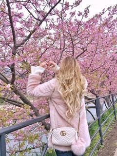桜とハートの写真・画像素材[1228737]