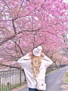 河津桜と女性の写真・画像素材[1228762]