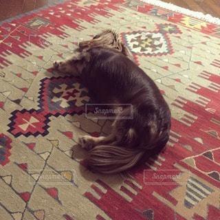 犬の写真・画像素材[42612]